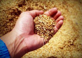 Експортните цени на руското жито вървят нагоре