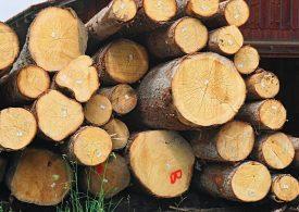 150 млн. лева е незаконният добив на дървесина в България