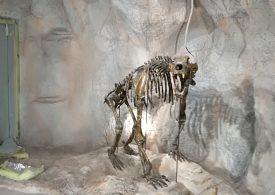Музеи в Чепеларе посрещат туристи без билет