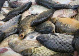 Рибарският ни сектор силно засегнат от нови ковид мерки в Румъния