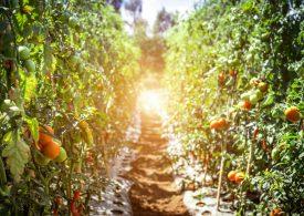 Проверяват производители на зеленчуци, поискали субсидии