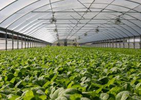 България очаква 50 млн. евро компенсации за земеделските производители
