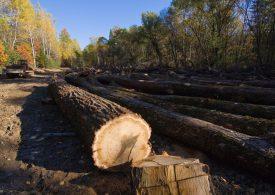 Европарламентът поиска повече пари от ОСП за опазване на горите