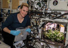 НАСА събра първата си реколта космически репички