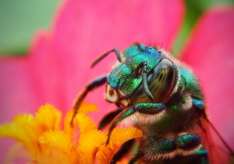 Мозъкът на насекомите - ключ към създаване на наистина интелигентни роботи