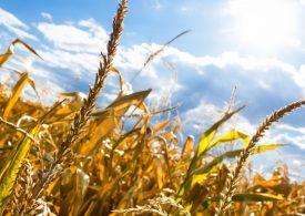 Губим все повече реколта заради климатичните промени