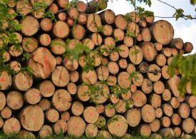 Кабинетът да забрани износа на дърва за огрев, поиска БСП