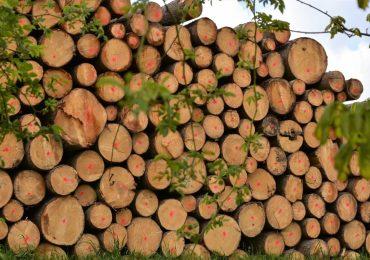 Е-платформа за продажба на дървесина елиминира предварителните договорки